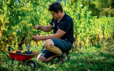 vin de savoie : matthieu goury, l'homme tranquille
