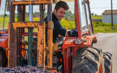 vins du beaujolais- les bertrand –