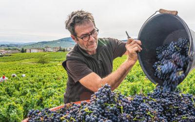 vins du beaujolais- jean-marc burgaud –
