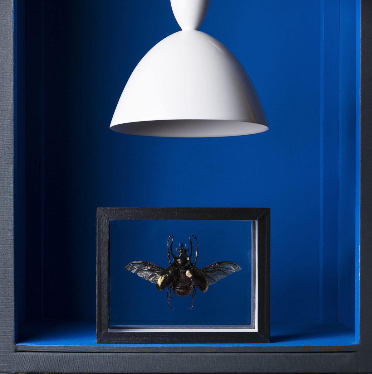 design / Atroposmoth Un il, deux ailes